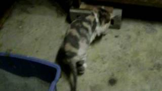 Cats waiting to be adopted! : ) Also, at the end of the video, thun...