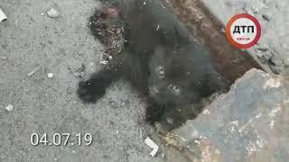 Киев. Срочно нужна помощь. Котенка переехала машина, повреждены лапы, готов принять Компаньон на Зак