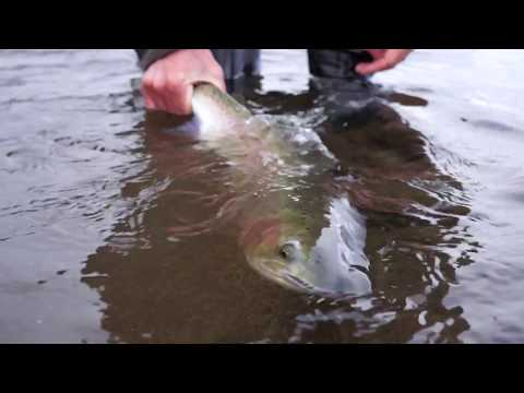 Fly Fishing Rogue River Winter Steelhead 2018!