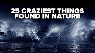 25 Craziest Things Found In Nature