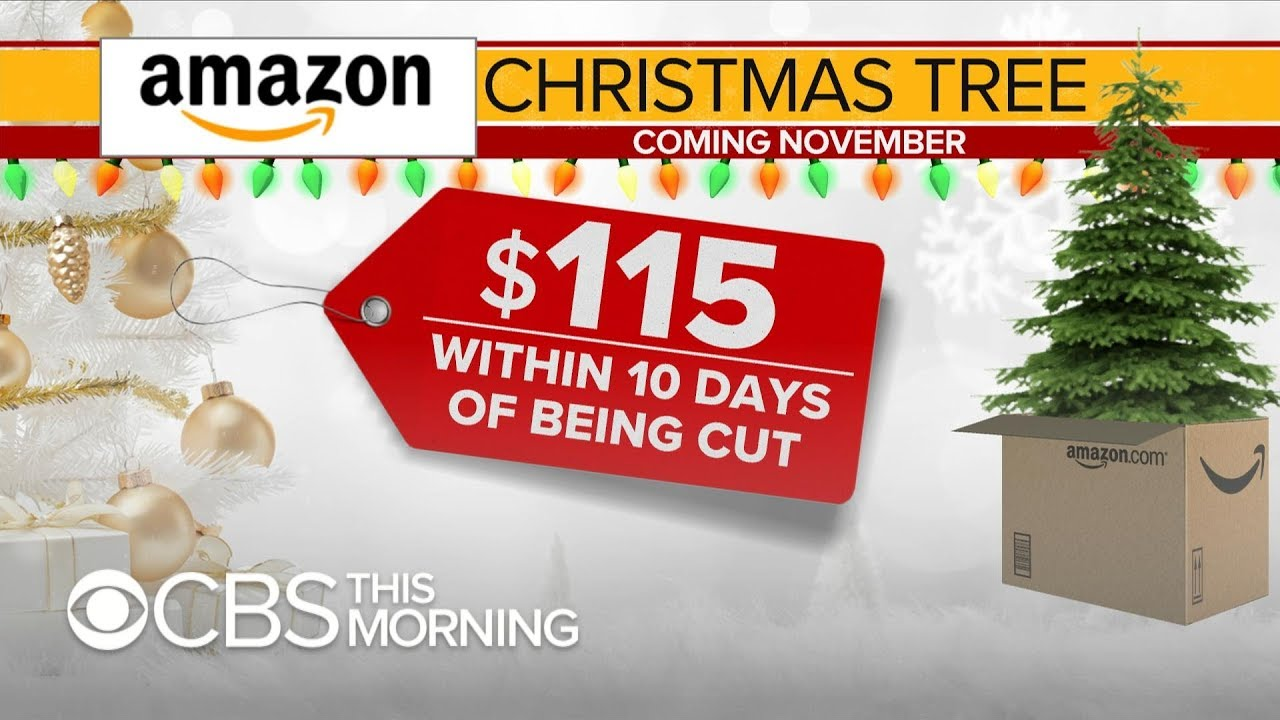 amazon to sell live full sized christmas trees online - Amazon Com Christmas Trees