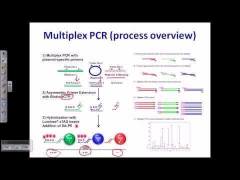 PCR types