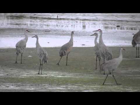 Viera Wetlands - 01/04/2014 - The Click Ponds