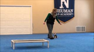 Myla (shiba Inu) Puppy Camp Dog Training Video