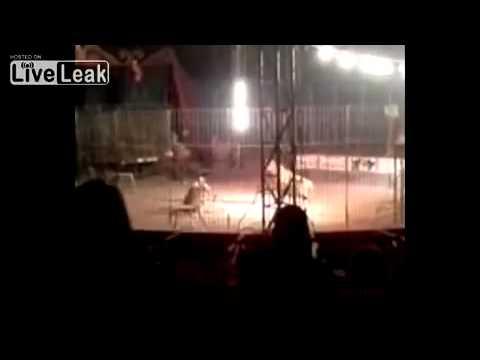 Kenhvideo.com-Diễn viên xiếc bị hổ ăn thịt khi đang biểu diễn