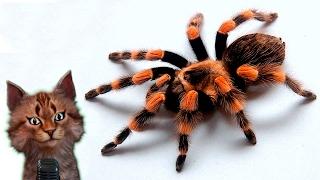 паук-птицеед | Интересные факты для детей | биология | Interesnie fakti