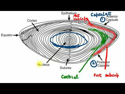 OPHTHALMOLOGY LECTURES Diseases of lens PART 1 Basic anatomy & physiology of lens