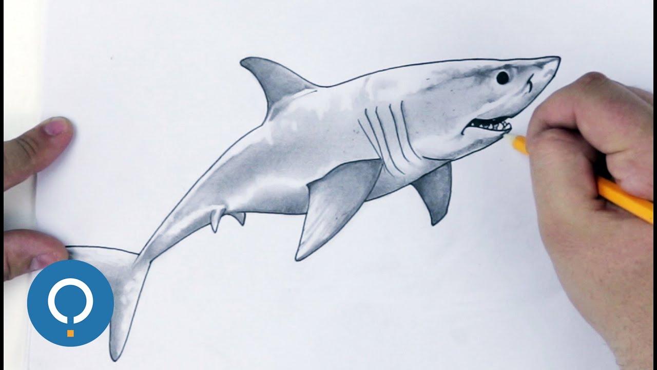 disegno squalo passo a passo youtube