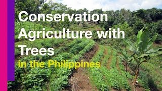 Conservation Agriculture with Trees in the Philippines