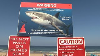 Cape Cod: a holiday destination for unwelcome visitors - the Great White Shark   AFP