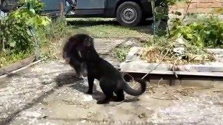 Приколы домашние животные  Смотреть бесплатно на ютубе видео смешные животные видео