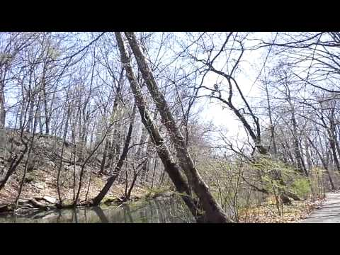 New York City upclose - NYC nature - the Bronx River, with bird sounds