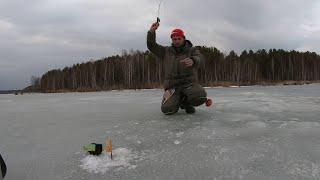 Ловля на Черта и Муху!зимняя рыбалка,я просто его опускаю и клюёт!Последний лед,БелояркА Эти загибы!