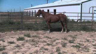 Horse with stifle problem