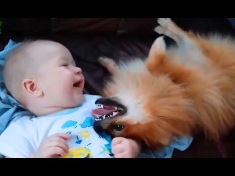 sevimli kedi ve köpekler aşk bebekler derleme 2015  köpekler 2015  kedi 2015  720p