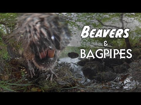 Beavers And Bagpipes – A 360/VR experience