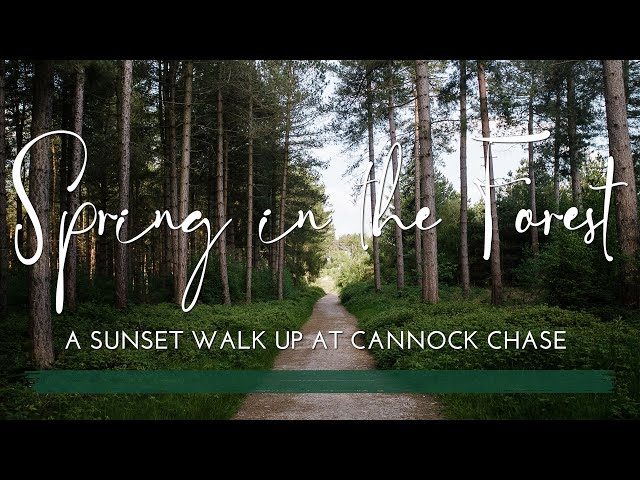 Spring in the Forest   A Sunset Walk at Cannock Chase   Peaceful   Relaxing   No Talking   Cinematic