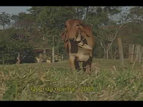 FAMILIA QUERIDA - MORENA AGRO - CATU-BA
