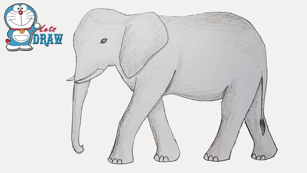 How To Draw Elephant Step By Step Youtube