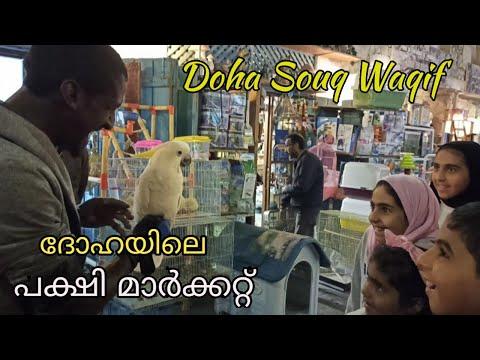 Souq Waqif Doha Qatar|Pets Market Doha|Birds Market Doha|Aquarium Fish Doha Qatar