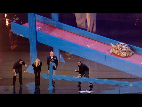Britain's Got More Talent 2016 S10E05 Bertie 'The Speedster' Tortoise Goes For The World Record Full