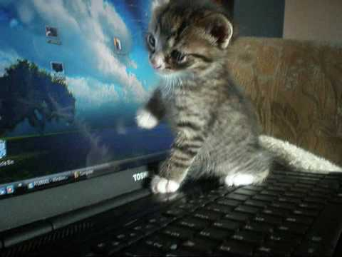 Why Do Cats Like Computers