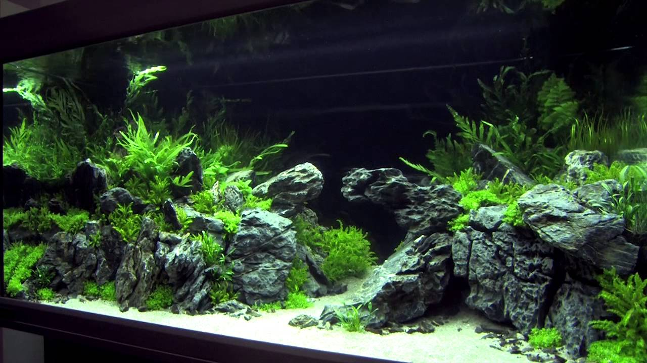 Xl Tanks Of The Aquascaping Contest Quot The Art Of The Planted Aquarium Quot 2014 Pt 2 Of 3 Youtube