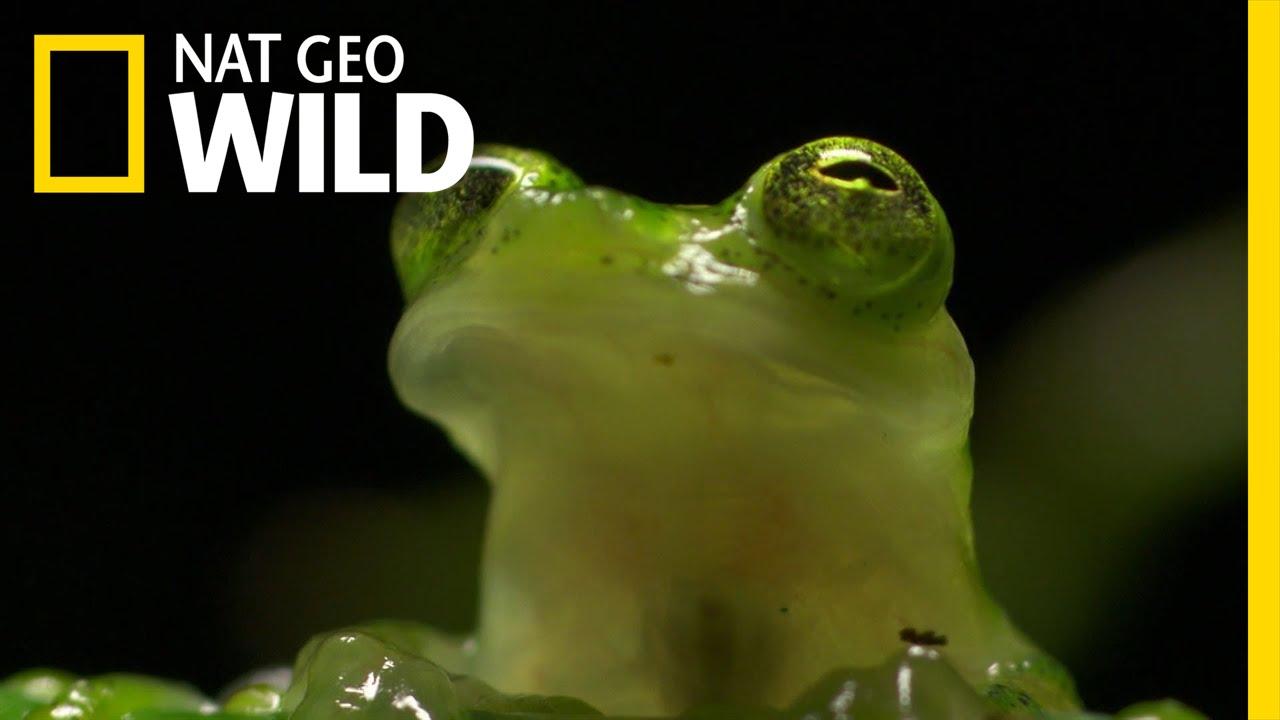 Protective Ninja Frog Wonderfully Weird Youtube