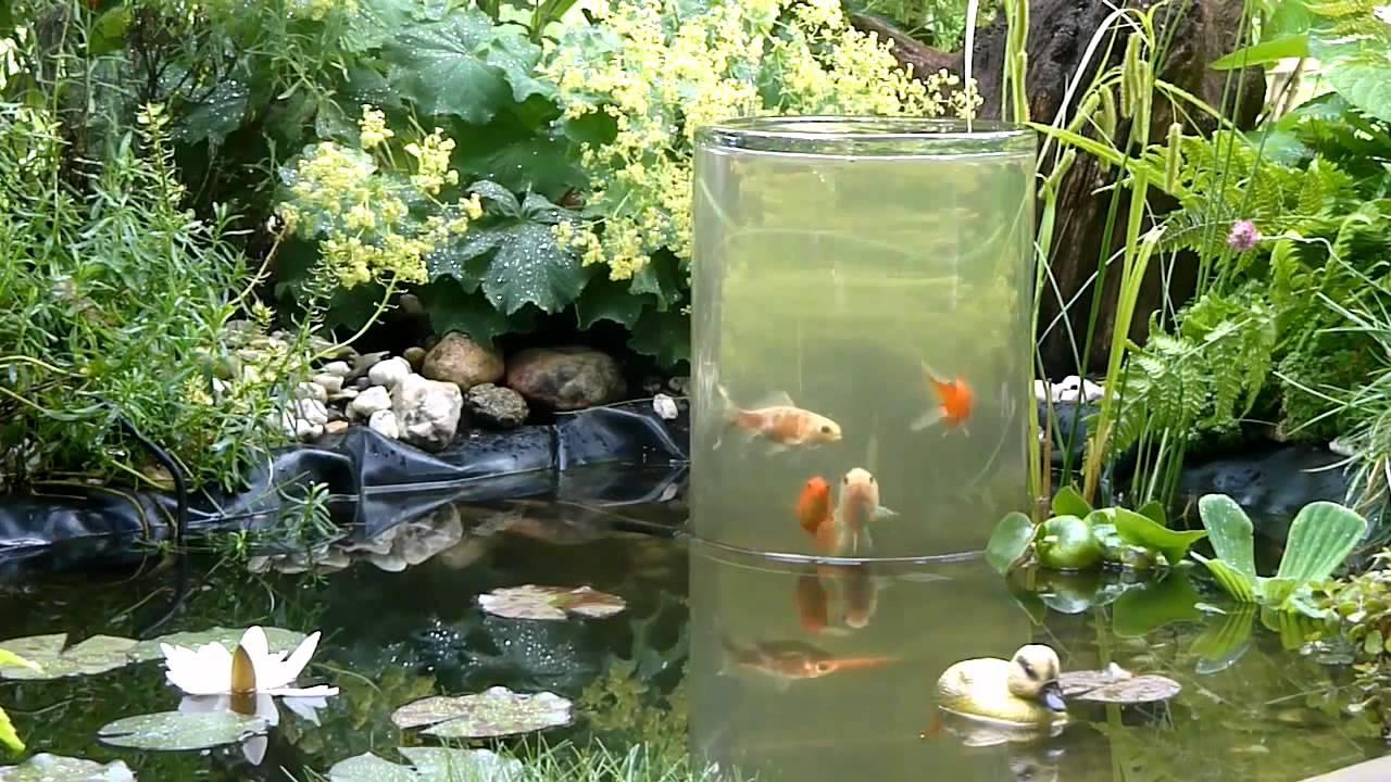 Mein bearbeitetes video youtube for Gartenteich aquarium