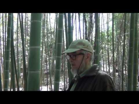 ALABAMA BAMBOO STORY  - The Horn Bamboo Forest of Northeast Alabama.wmv