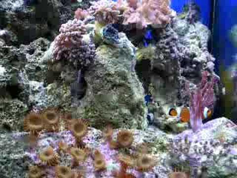 Mirabello 30 litri marino plafoniera youtube for Acquario marino in vendita