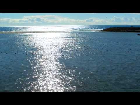 PTV Malibu ducks 112715 noon