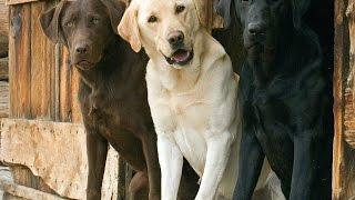 Супер приколы с СОБАКАМИ ДЕКАБРЬ 2014 приколы 2014 Best Fails Dogs Of December 2014