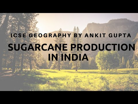 ICSE geography Cash crops Sugercane