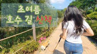 [일상로그] 웰시코기 산책 #5 _ 오남호수공원 호수 …