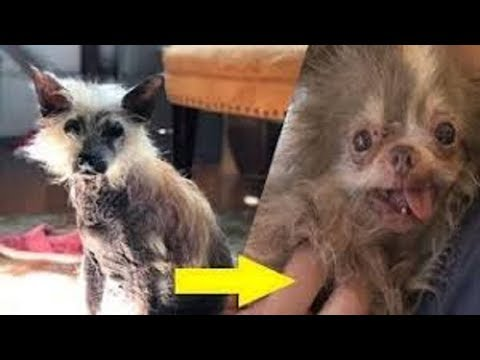 This chihuahua lived in a puppy mill for so long, his cage had rusted shut