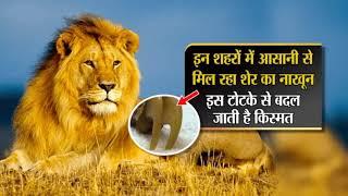 Lion Nail शेर के नाखून के फायदे, प्रयोग ,धन, वैभव, दुश्मन का खात्मा लाभ,कीमत,