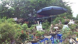 Tham khảo giá cây của một số nhà vườn ở chợ cây cảnh Hà Đông - bonsai market in Van Phuc - Hà Dong