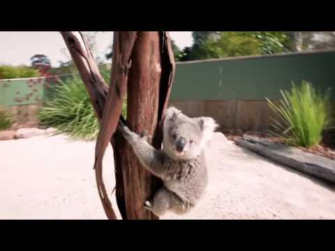 LOL Pets clip | Funny cats, smart dogs, cute puppies | Funny Berry Animals #39