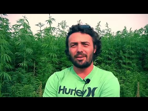 Montana Ag Network: industrial hemp is gaining traction among farmers