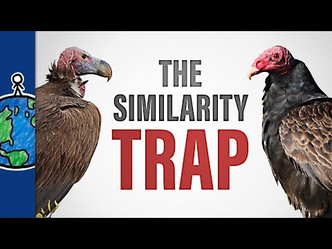 The Similarity Trap