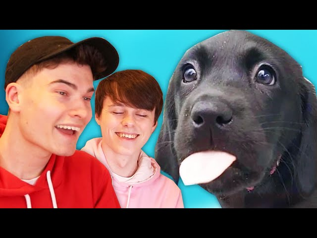 WillNE & ImAllexx Rate the Internet's Best Dogs