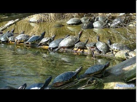 Tortue de floride r fl chissez bien avant d 39 acheter - Bassin tortue floride strasbourg ...