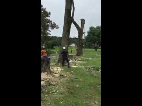 Memorial Park tree cutting Burry Port