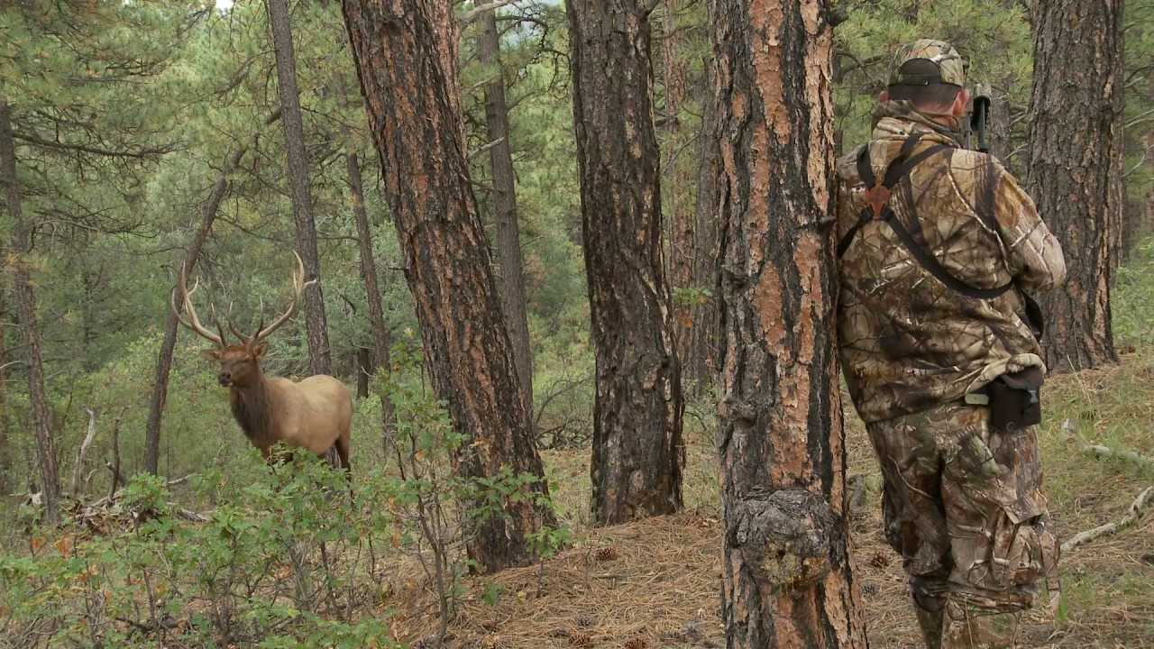 Archery Bow Diagram El Falcon Wiring Radio Quartering-to Shot On A Monster Bull Elk - Youtube