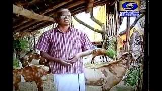 Visakam Goat Farm