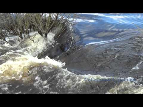 Шлюзы на реке Чулым. Здвинского района. 27.04.2016 Рыба идет на нерест