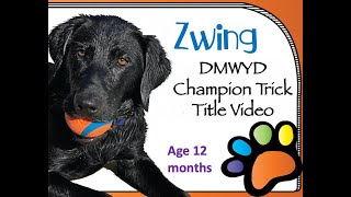 Do More With Your Dog Champion Trick Dog Title Video for Zwing