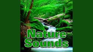 Waterfall and Pool in a Small Hidden Cavern Sound Effect