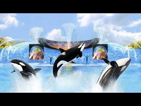 A Viagem Perfeita: SeaWorld Parks & Entertainment Show da Shamu!!!
